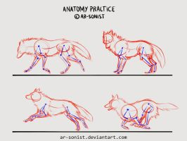 Anatomy practice by ar-sonist