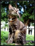 Possing Cat by JacquiJax
