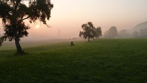 Sunrise meadow with tree 1 by SelvaStock