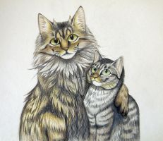 Logan and Babycat by SarityCreations