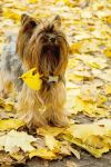 yellow day by Pyf-Photo