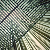 .kyrie by shiek0r