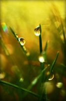 Waterdrop by Tiina23
