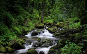 Black Forest River III by NYClaudioTesta