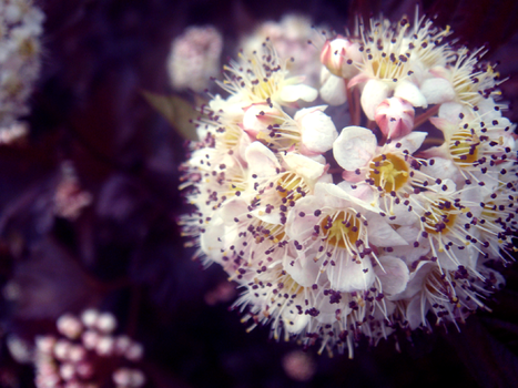 Photo - Flower Study9 by firstfear
