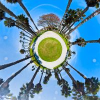 Little Palm Tree Planet by SomaKun