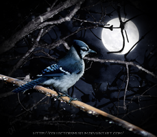 Midnight Song by FuchsiaBud