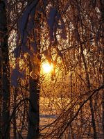 Winter Sun II by Anna-Belash