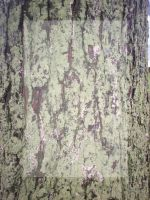 Tree Bark Template by sd-stock