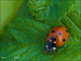 Insects_01 by jailbird