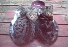 Brothers and sister by Ripplin