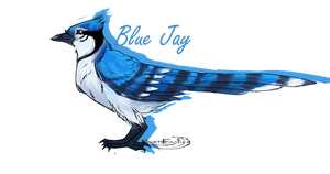 Blue Jay by Ravenfeather613