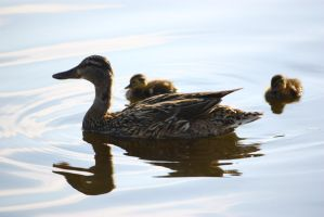 Mother and sons by cjvernet