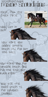 Mane Tutorial by McMahonEquine