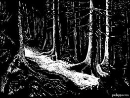 Dark forest by peileppe