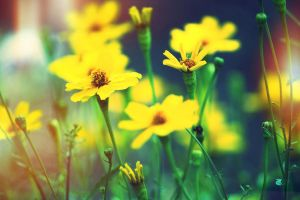 Be like the flower, turn your faces to the sun by ahley