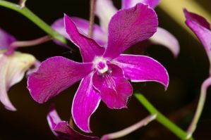 Store Orchid by PatGoltz
