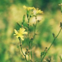 dreamy yellow by Aparazita-R