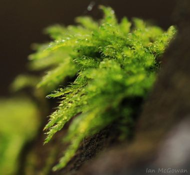 Moss dew . by 999999999a
