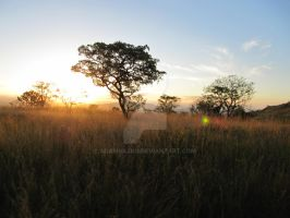 Sun_set_on_safari by adamsajko