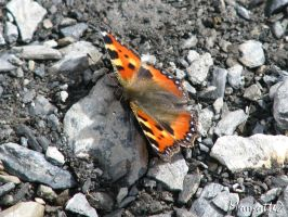 Mountain's butterfly by Momotte2