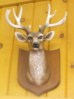 Stock:  Deer Head by Stock-By-Michelle