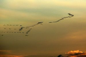Cranes are leaving 4 by OldEric