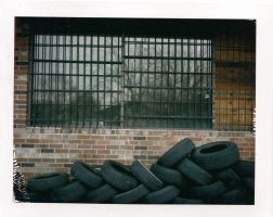Polaroid: Tires, Window and Tree by shuttermonkey89