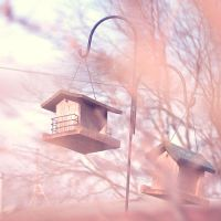 my treehouse by onixa