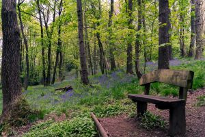Bluebell Wood by woody1981