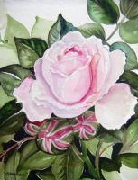 Rose Buds by HouseofChabrier
