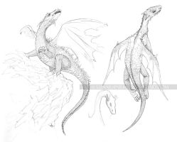 Dragon Drawings by lunarsparks