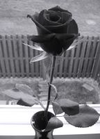 the black rose by xgrace1882