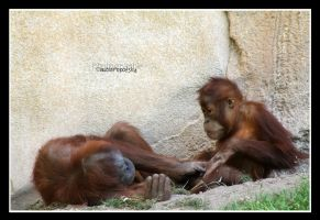 Orangutan mother with child by declaudi