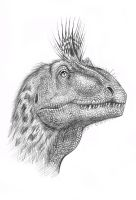 Cryolophosaurus  head by MALvit