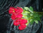 red roses1 by nikki286