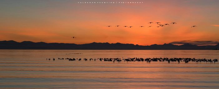 Birds in the Afterglow by Val-Faustino