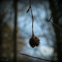 ___ by Weissglut