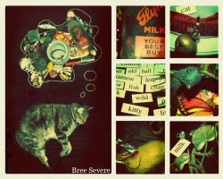 A Cats Dream Like Old Film by LovelyShrew