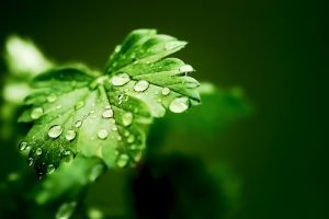 Rain Drops on leaves by revolution-man