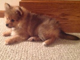 OUR NEW PUPPY! 4 by LucarioZelda2000