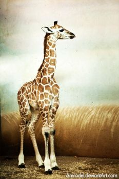Little Giraffe Model by amrodel