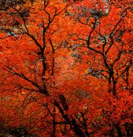 Orange Tree Fall Colors square by houstonryan