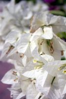 White Bloom by Amy-Lou-Photography