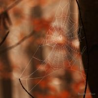 the web in the forest by ArkanumTenebrae