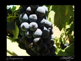 Grapevine 2 by DistantVisions