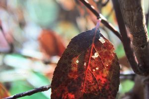 46.52 - The colors of autumn. by mylittlebluesky