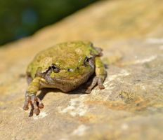 Waiting for a Frog Like You by SandieBlair