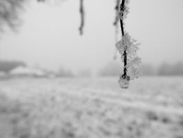 Under the snow VIII by Mayiaaa