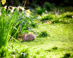 Banquet for a bunny II by bexa
